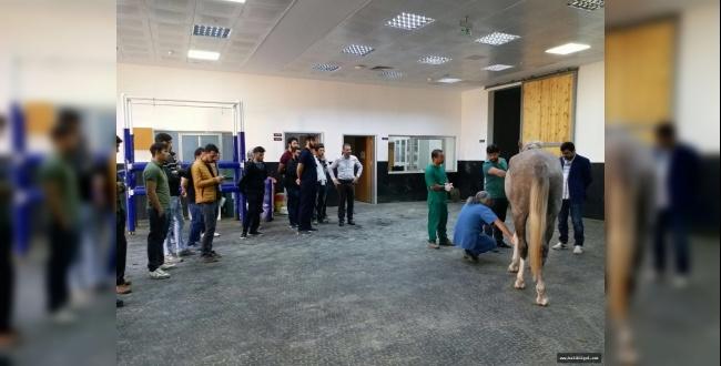 Veteriner Fakültesi ile TJK Arasında İşbirliği Protokolü İmzalandı