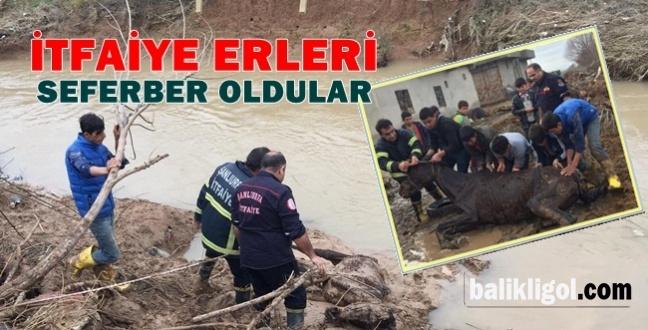 Eyyübiye'de Bataklığa Saplanan Atı İtfaiye ekipleri kurtardı