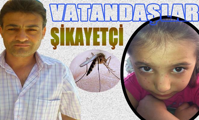 Vatandaş; Sivrisinek istilasına uğradık, yetkililer nerede