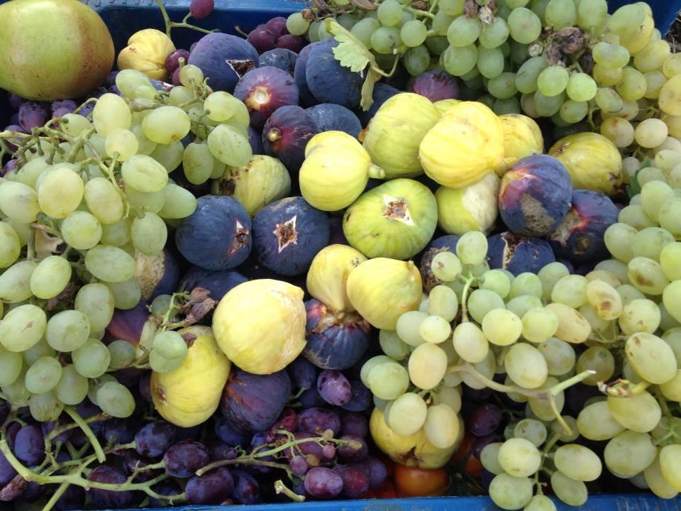 Şanlıurfa'da meyve sezonu