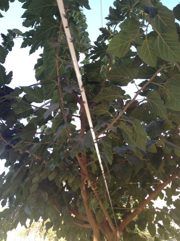 Şanlıurfa Belediyesinden sineklere ilginç çözüm