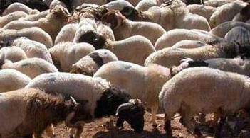Suriye sınırındaki hayvan kaçakçılarına operasyon