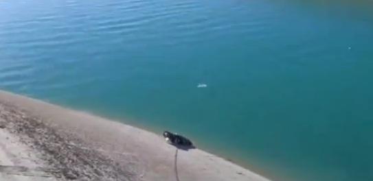 Kanalda Parçalanmış ceset bulundu VİDEO