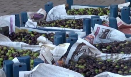 Zeytin Şanlıurfa'da tezgahlara indi VİDEO