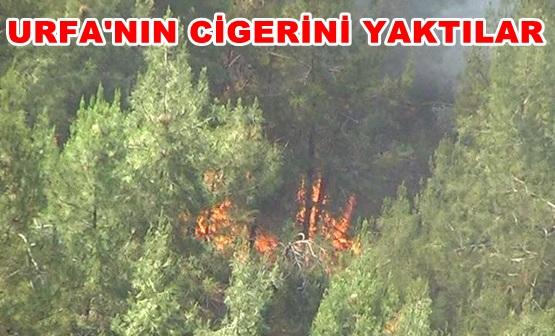Atatürk Barajındaki ormanı piknikçiler mi yaktı?