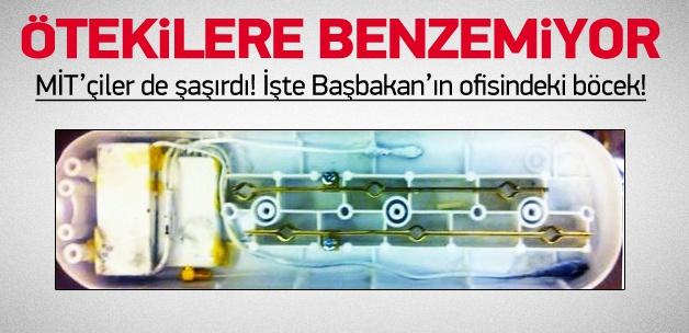 İşte Türkiye'nin 3 yıldır konuştuğu böcek!