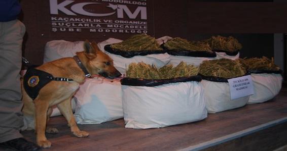 Tıra gizlenen esrarı narkotik köpekle çıkardılar VİDEO