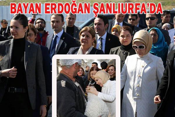 Emine Erdoğan, Urfa'da minik kuzuyu sevdi