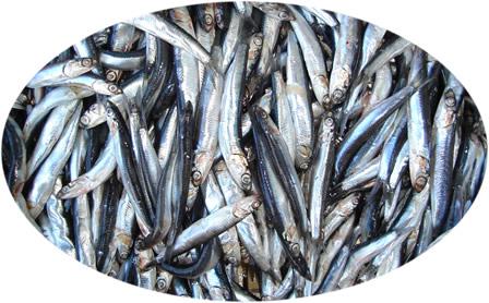 Balıkçılık av sezonu yarın sona eriyor