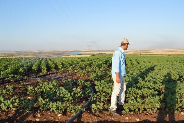 Hilvanlı çiftçiler pamuk ekimini terk ediyor