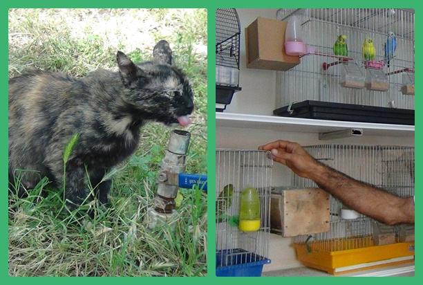 Urfa'daki Sokak hayvanlarının sıcakla mücadelesi