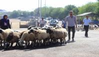 Çatışmalar hayvan satıcılarını da olumsuz etkiledi