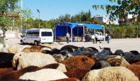 Seyhan'da Kurban Satış ve Kesim Noktaları Belirlendi