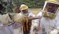 Türkiye'de arı ölümleri kaygı verici boyutlara geldi