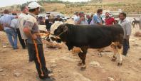 Midyat'ta kurbanlıklar alıcılarını bekliyor