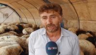 Kurbanlıklar Gaziantep'e getirilmeye başlandı