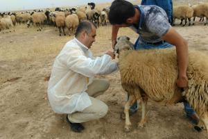 Viranşehir'de 'yavru atma' hastalığına karşı harekete geçildi