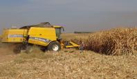 Ceylanpınarlı çiftçiler mısır hasadına başladı