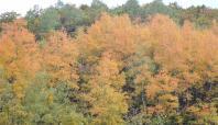 Bitlis'ten sonbahar manzaraları