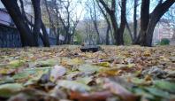 Ağrı'da sonbahar güzelliği