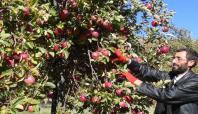 Bingöl'de elma rekoltesindeki artış üreticiye yaramadı