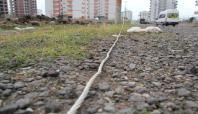 Kopan elektrik telleri ölüme davetiye çıkarıyor