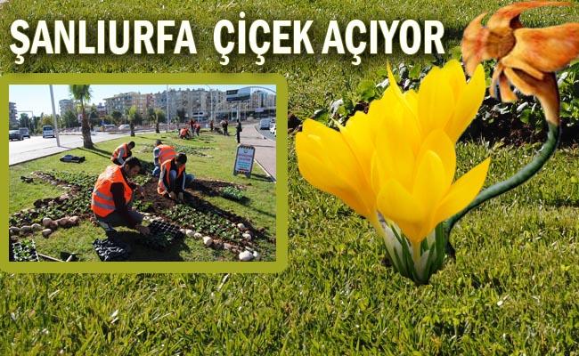 Urfa'ya Miyonla Çiçek Dikiliyor