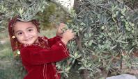 Gaziantep'te zeytin üretiminde yüksek rekolte bekleniliyor