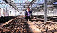 Van YYÜ'de 21 bin ceviz tohumu ekildi