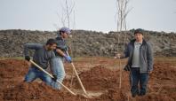 Hilvanlı çiftçiler badem ekimine önem veriyor