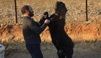 Batman'da Halep keçisi yetiştiriciliğine başlandı
