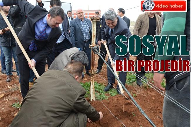 Harran Üniversitesinde 9 bin ağaç toprakla buluştu