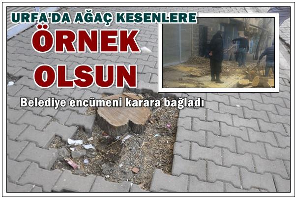 Siverek'te evinin önündeki ağacı kesen kişiye verilen örnek ceza!