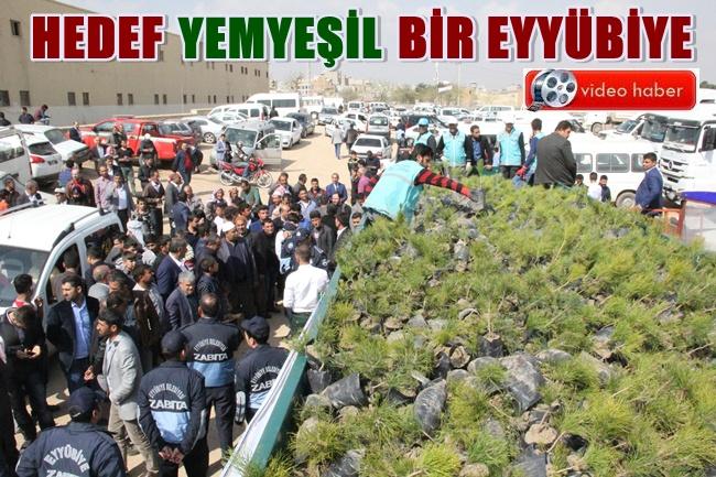 Eyyübiye Belediyesi binlerce fidan dağıttı