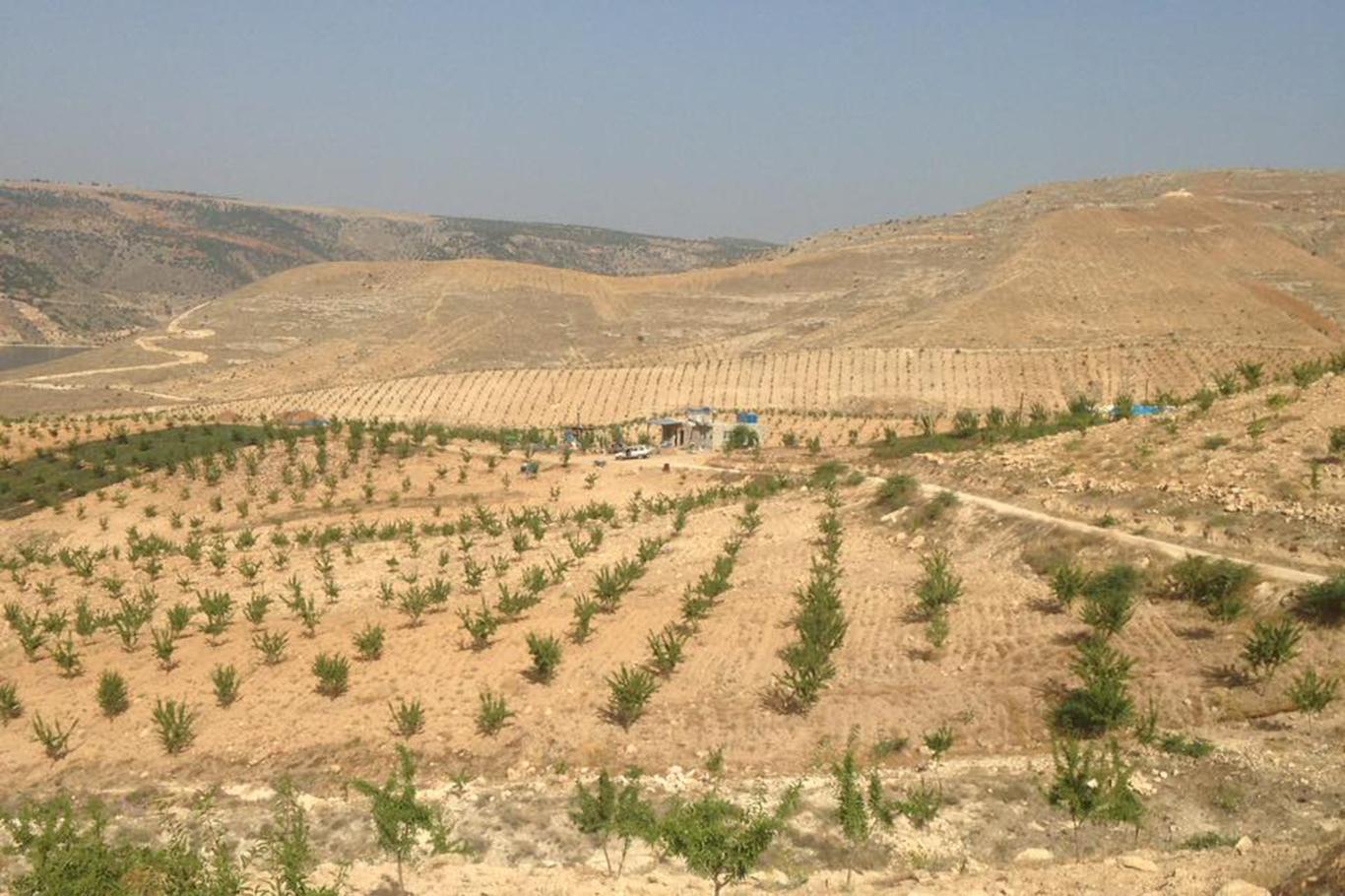 Bakan Eroğlu Açıkladı: Halfeti'de dikilen 70 bin fidan ilk meyvesini verdi
