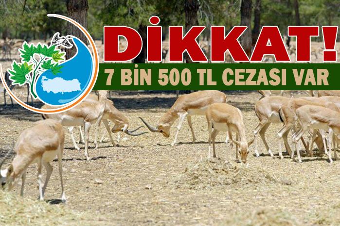 Orman ve Su İşleri Bakanlığı Urfalıları uyardı!