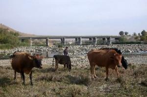 Ambartepede inekleri çaldılar
