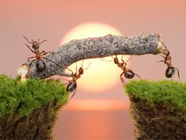Kur'an'da konuşma haberi verilen karıncalar