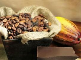 Fareli ve böcekli kakao yedik mi?