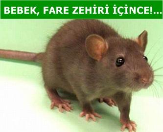 Bebek, fare zehiri içti