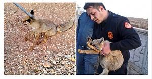 Urfa İtfaiye ekipleri çukura düşen tilkiyi kurtardı