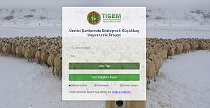 işte 300 koyun başvurusu için yapılması gerekenler