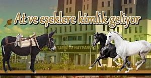 Tarım Bakanlığı At ve eşeklere kimlik verecek