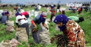 Mevsimlik Tarım İşçileri Eve Dönmenin Mutluluğunu Yaşıyor