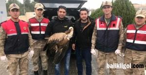 Urfa'da Yaralı Olarak Bulunan Kızılbaş Akbaba Doğaya Bırakıldı