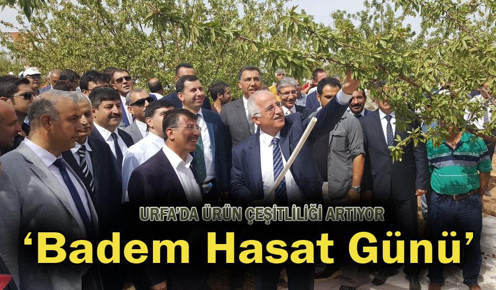 Urfa'da 'Badem Hasat Günü' etkinliği düzenlendi