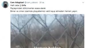 Urfa'da köpeklere yapılan işkence! Bunun adı vahşet! Köpek Dövüşü