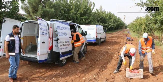 Şanlıurfa Büyükşehir'den Dar Gelirli Ailelere Meyve İkramı