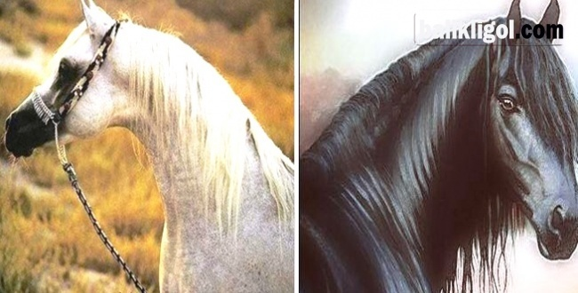 Urfa'da ölen atların ölüm nedeni belli oldu