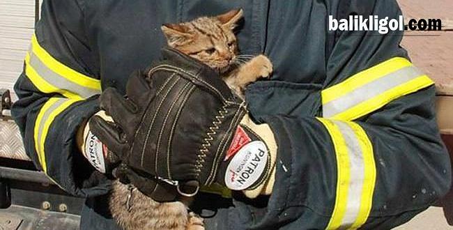 Birecik'te köprüde asılı kalan yavru kedinin imdadına itfaiye yetişti